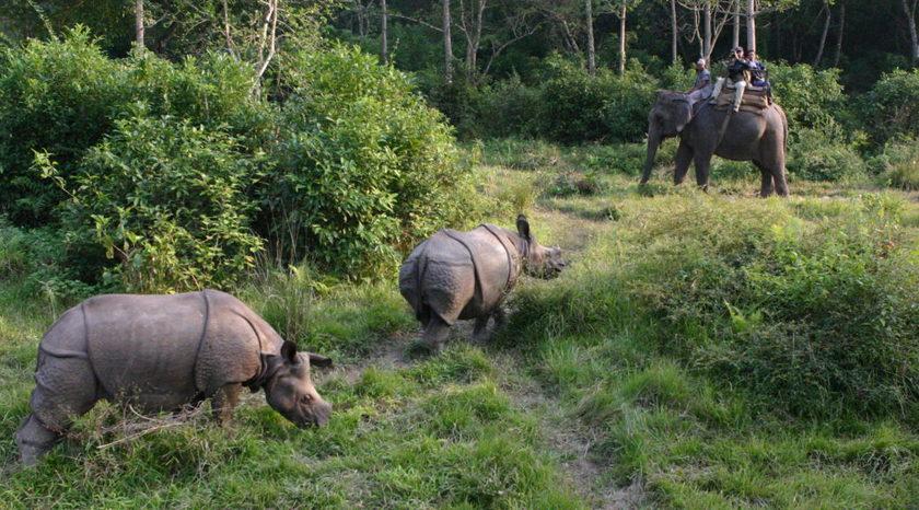 वन्यजन्तु संरक्षणमा स्थानीय निकायका चुनौती र अवसर